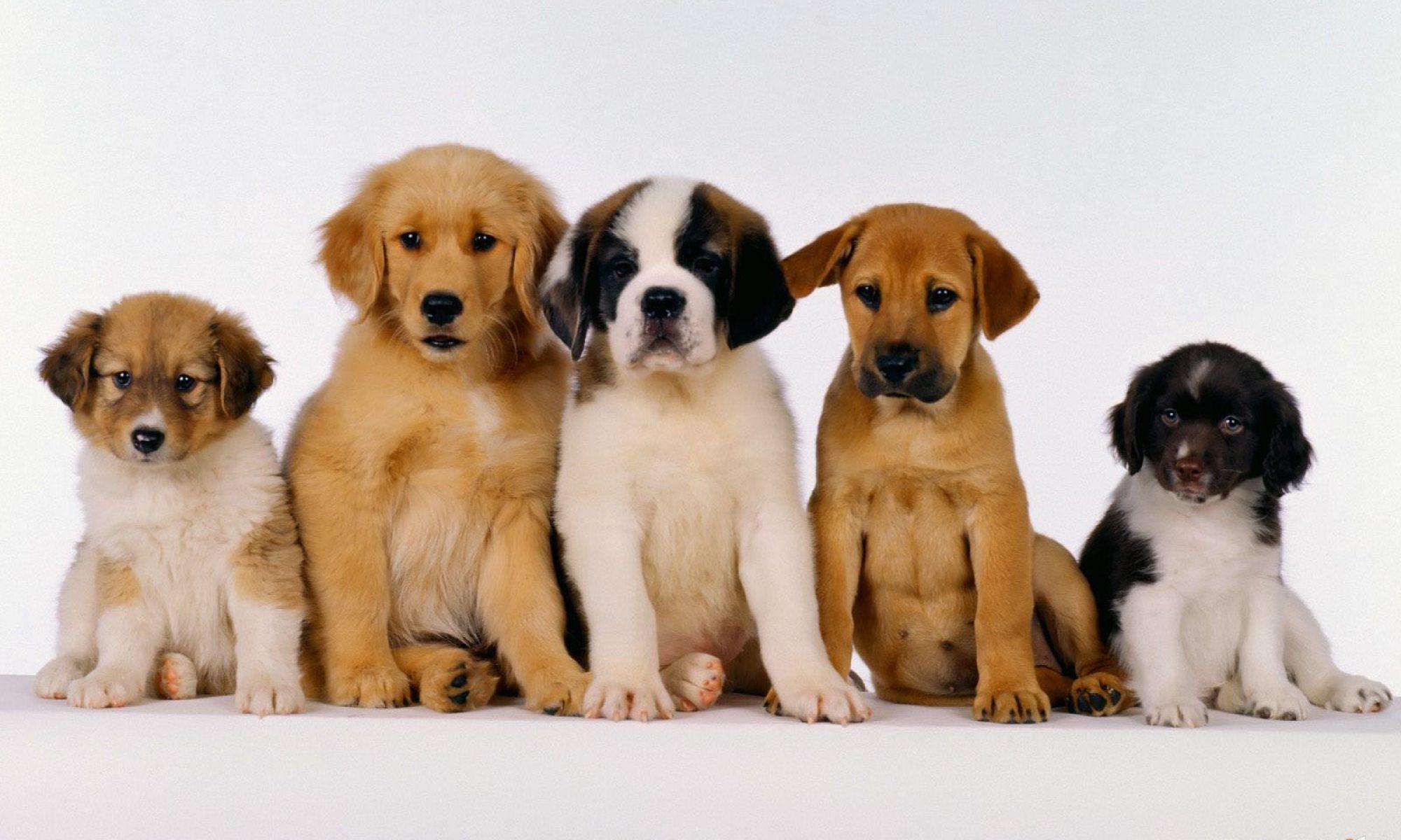 Caninosteo: Ostéopathe Canin
